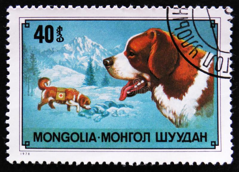 Dog breed St Bernard Dog, mountain resque dog, circa 1978. MOSCOW, RUSSIA - APRIL 2, 2017: A post stamp printed in Mongolia shows dog breed St Bernard Dog stock image