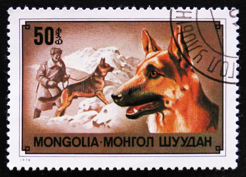German shepherd dog breed, circa 1978. MOSCOW, RUSSIA - APRIL 2, 2017: A post stamp printed in Mongolia shows German shepherd dog breed, circa 1978 royalty free stock images