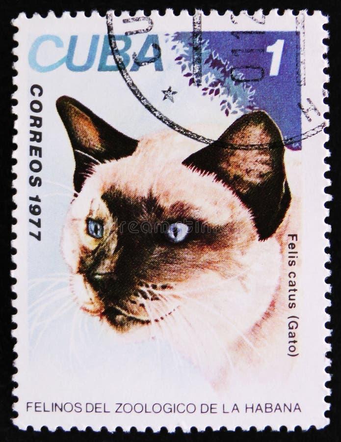 Felis catus, Gato, circa 1977. MOSCOW, RUSSIA - APRIL 2, 2017: A Stamp printed in Cuba shows image of a Felis catus, Gato, circa 1977 stock images