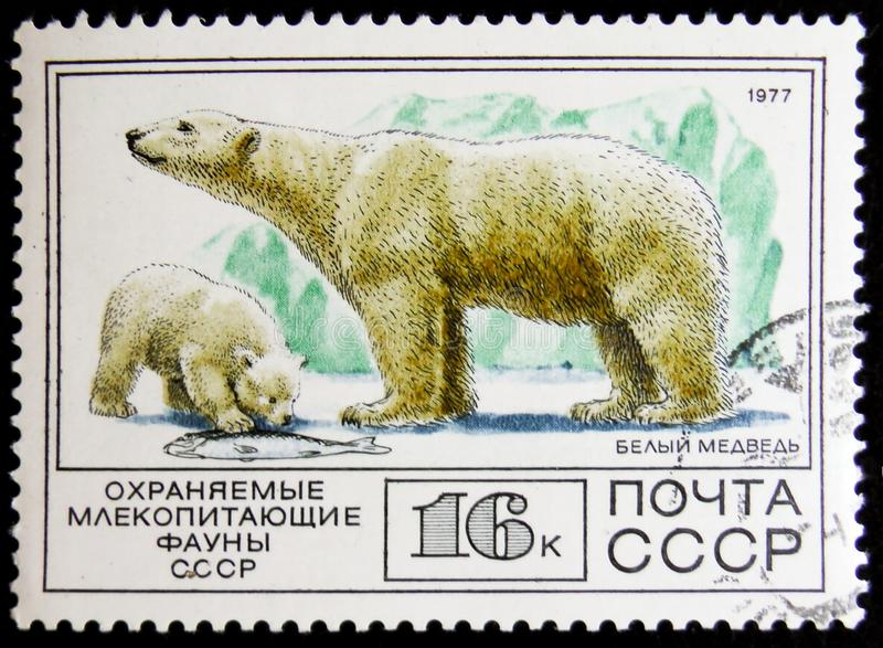 Stamp printed in USSR, shows a polar bear, circa 1977. MOSCOW, RUSSIA - APRIL 2, 2017: A stamp printed in USSR, shows a polar bear, circa 1977 stock image