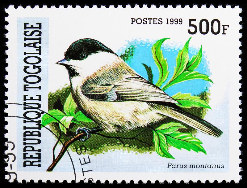 Willow Tit Parus montanus, Birds serie, circa 1999 royalty free stock images