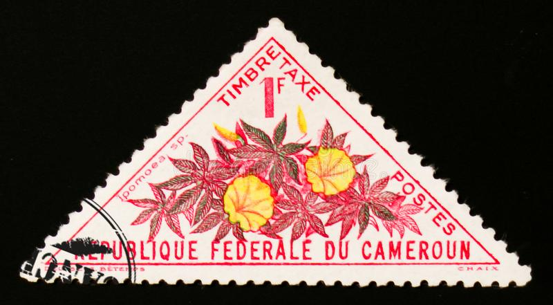 Ipomoea flower, circa 1963. MOSCOW, RUSSIA - AUGUST 29, 2017: A stamp printed in Cameroon shows Ipomoea flower, circa 1963 royalty free stock image
