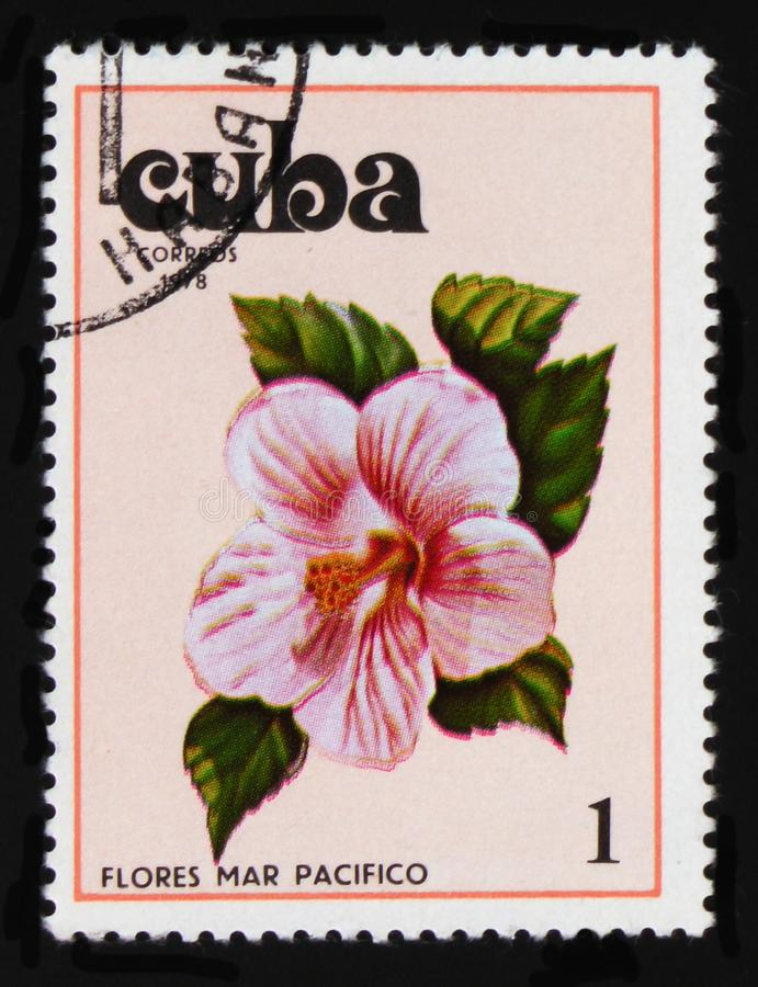 Hibiscus, Hibiscus serie, circa 1978. MOSCOW, RUSSIA - AUGUST 29, 2017: A stamp printed in Cuba shows Hibiscus, Hibiscus serie, circa 1978 stock image
