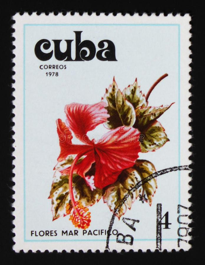 Hibiscus, Hibiscus serie, circa 1978. MOSCOW, RUSSIA - AUGUST 29, 2017: A stamp printed in Cuba shows Hibiscus, Hibiscus serie, circa 1978 stock photos