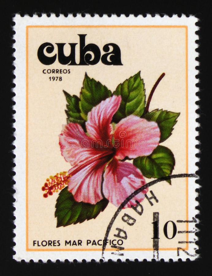 Hibiscus, Hibiscus serie, circa 1978. MOSCOW, RUSSIA - AUGUST 29, 2017: A stamp printed in Cuba shows Hibiscus, Hibiscus serie, circa 1978 stock photo