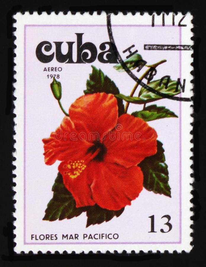 Hibiscus, serie, circa 1978. MOSCOW, RUSSIA - AUGUST 29, 2017: A stamp printed in Cuba shows Hibiscus, Hibiscus serie, circa 1978 stock photos