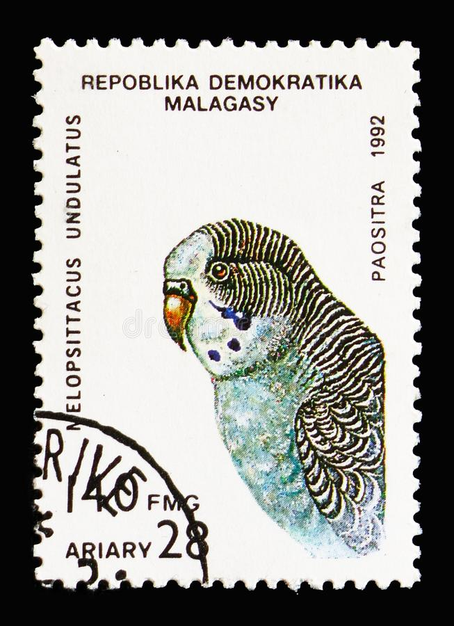 Budgerigar (Melopsittacus undulatus), Parrots serie, circa 1993. MOSCOW, RUSSIA - AUGUST 18, 2018: A stamp printed in Madagascar shows Budgerigar (Melopsittacus stock photos