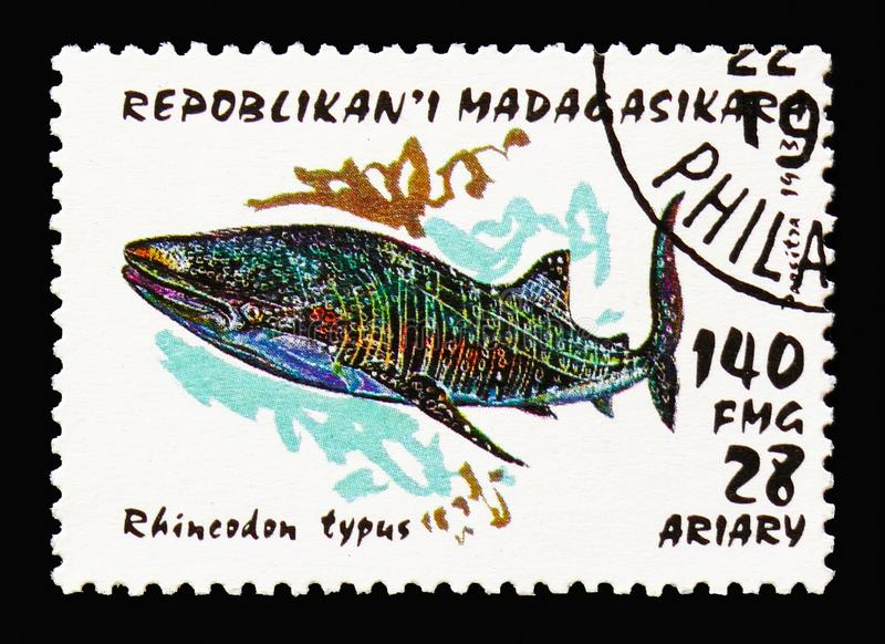 Whale Shark (Rhineodon typus), Sharks serie, circa 1993. MOSCOW, RUSSIA - AUGUST 18, 2018: A stamp printed in Madagascar shows Whale Shark (Rhineodon typus) royalty free stock photography