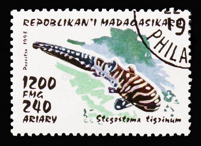 Zebra Shark (Stegostoma tigrinum), Sharks serie, circa 1993. MOSCOW, RUSSIA - AUGUST 18, 2018: A stamp printed in Madagascar shows Zebra Shark (Stegostoma stock images