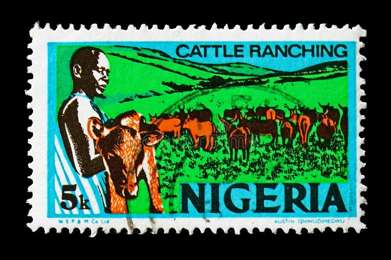 Cattle Ranching, Economy serie, circa 1976. MOSCOW, RUSSIA - AUGUST 18, 2018: A stamp printed in Nigeria shows Cattle Ranching, Economy serie, circa 1976 royalty free stock images