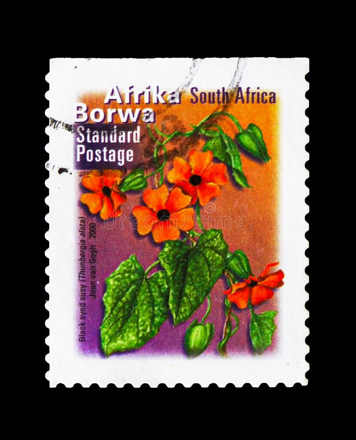 Thunbergia alata, Fauna and flora serie, circa 2000. MOSCOW, RUSSIA - AUGUST 18, 2018: A stamp printed in South Africa shows Thunbergia alata, Fauna and flora royalty free stock photography