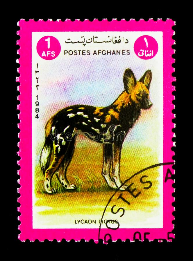 African Wild Dog (Lycaon pictus), Animals serie, circa 1984. MOSCOW, RUSSIA - DECEMBER 21, 2017: A stamp printed in Afghanistan shows African Wild Dog (Lycaon royalty free stock photography