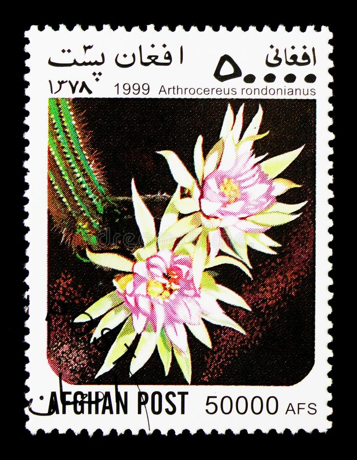 Arthrocereus (Arthrocereus rondonianus), Cacti serie, circa 1999. MOSCOW, RUSSIA - DECEMBER 21, 2017: A stamp printed in Afghanistan shows Arthrocereus ( stock photo