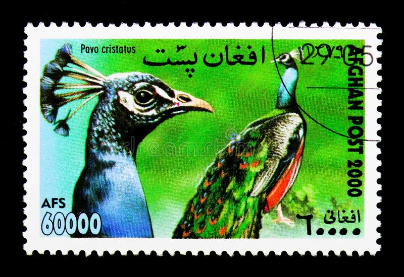Common Peacock (Pavo cristatus), International Stamp Exhibition. MOSCOW, RUSSIA - DECEMBER 21, 2017: A stamp printed in Afghanistan shows Common Peacock (Pavo royalty free stock photography