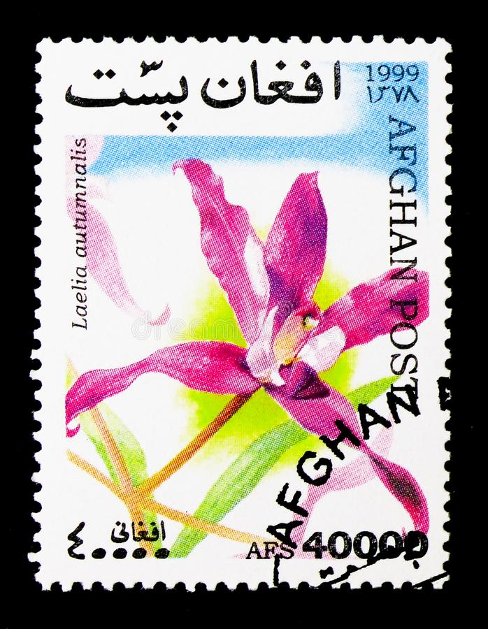 Laelia autumnalis, Orchids serie, circa 1999. MOSCOW, RUSSIA - DECEMBER 21, 2017: A stamp printed in Afghanistan shows Laelia autumnalis, Orchids serie, circa royalty free stock photography