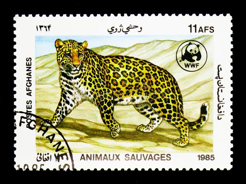 Leopard (Panthera pardus), World Wildlife Fund - The Leopard ser. MOSCOW, RUSSIA - DECEMBER 21, 2017: A stamp printed in Afghanistan shows Leopard (Panthera stock photo