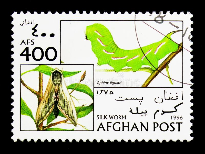 Privet Hawkmoth (Sphinx ligustri), Silkworms serie, circa 1996. MOSCOW, RUSSIA - DECEMBER 21, 2017: A stamp printed in Afghanistan shows Privet Hawkmoth (Sphinx stock images