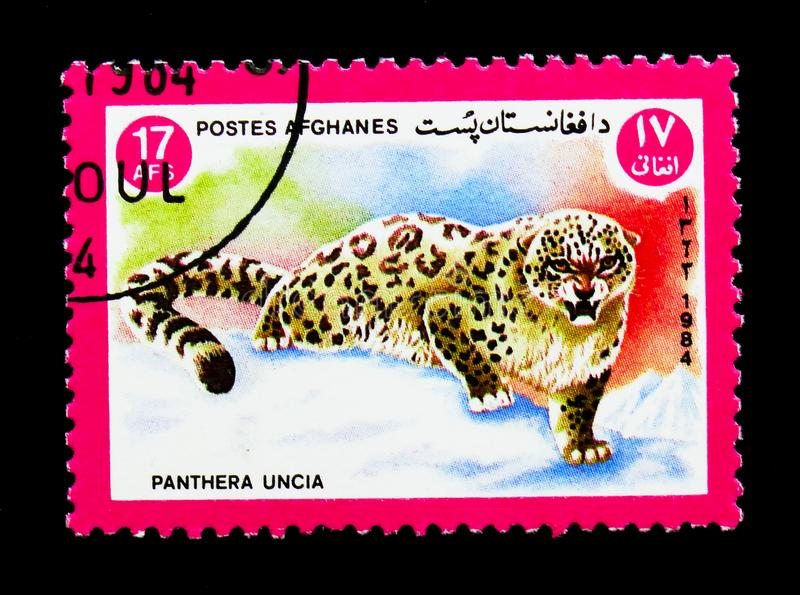 Snow Leopard (Panthera uncia), Animals serie, circa 1984. MOSCOW, RUSSIA - DECEMBER 21, 2017: A stamp printed in Afghanistan shows Snow Leopard (Panthera uncia stock photo
