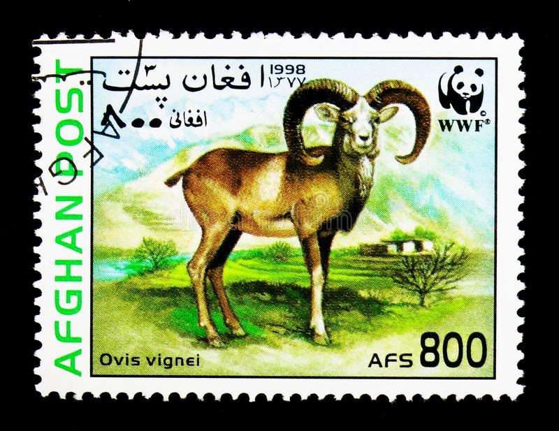 Urial (Ovis orientalis vignei), WWF - Wild sheep serie, circa 1998. MOSCOW, RUSSIA - DECEMBER 21, 2017: A stamp printed in Afghanistan shows Urial (Ovis stock photography