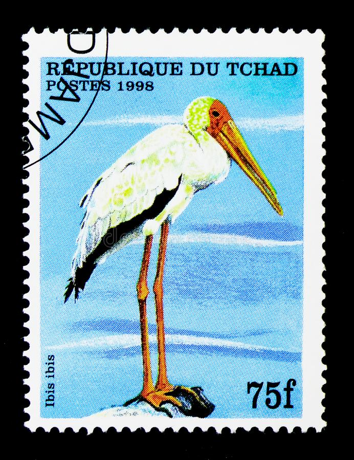 Yellow-billed Stork (Mycteria ibis), serie, circa 1999. MOSCOW, RUSSIA - DECEMBER 21, 2017: A stamp printed in Chad shows Yellow-billed Stork (Mycteria ibis) stock image
