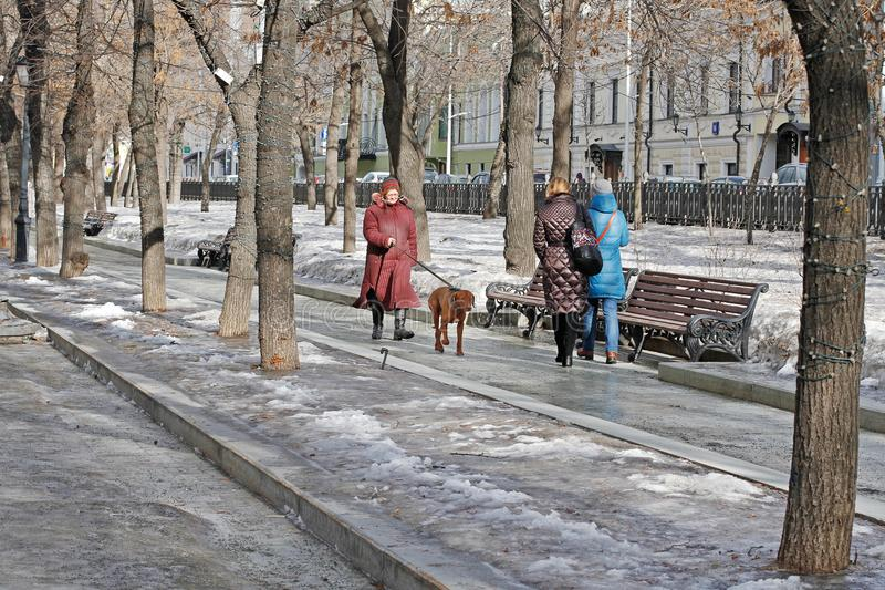 Senior woman walking with her dog on Tverskoy Boulevard in Moscow. Moscow, Russia - February 25, 2017: Senior woman walking with her dog on Tverskoy Boulevard in royalty free stock photo