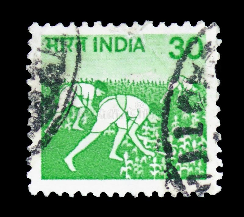 Women with the rice harvests, Agriculture serie, circa 1979. MOSCOW, RUSSIA - FEBRUARY 10, 2019: A stamp printed in India shows Women with the rice harvests stock photos