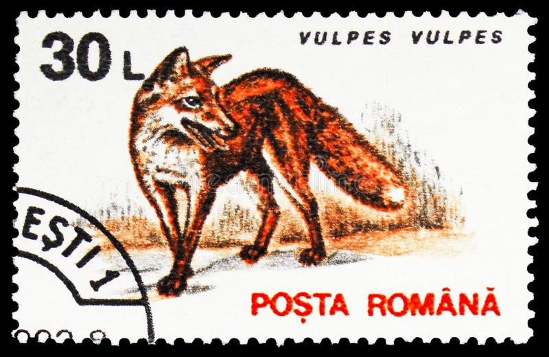 Red Fox (Vulpes vulpes), Mammals serie, circa 1993. MOSCOW, RUSSIA - FEBRUARY 10, 2019: A stamp printed in Romania shows Red Fox (Vulpes vulpes), Mammals serie stock photos