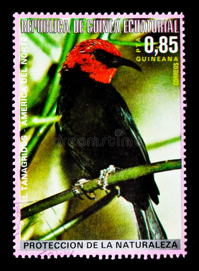 Black-bellied Myzomela Myzomela erythromelas, North American birds serie, circa 1976. MOSCOW, RUSSIA - JANUARY 2, 2018: A stamp printed in Equatorial Guinea stock images