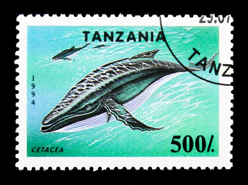 Whale Cetacea, Endangered Species serie, circa 1994. MOSCOW, RUSSIA - JANUARY 2, 2018: A stamp printed in Tanzania shows Whale Cetacea, Endangered Species serie royalty free stock images