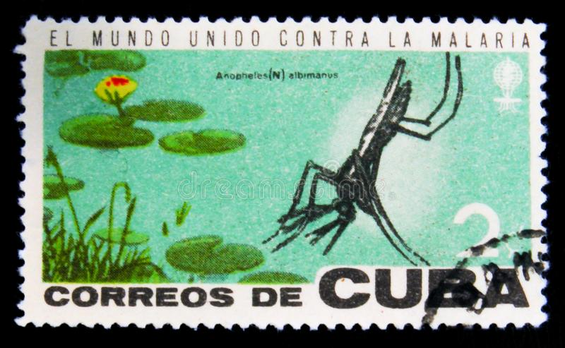 MOSCOW, RUSSIA - JULY 15, 2017: Rare stamp printed in Cuba shows. Mosquito, Anopheles Mosquito (Anopheles sp.), Fight against Malaria, circa 1962 royalty free stock image