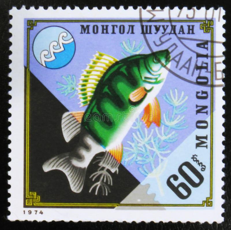 MOSCOW, RUSSIA - JULY 15, 2017: Rare stamp printed in Mongolia s. Hows Perca fluviatilis, commonly known as the European perch, circa 1974 stock photos