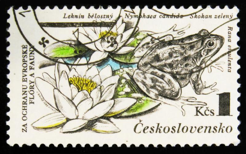 MOSCOW, RUSSIA - JULY 15, 2017: A stamp printed in Cuba shows Wa. Ter lilies and frog with the inscription Nymphaea candida, Rana esculenta from the series royalty free stock photo