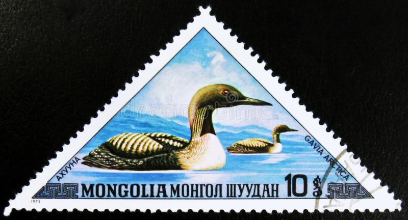 MOSCOW, RUSSIA - JULY 15, 2017: A stamp printed in Mongolia show. S Black-throated Loon - Gavia arctica, series, circa 1973 stock images
