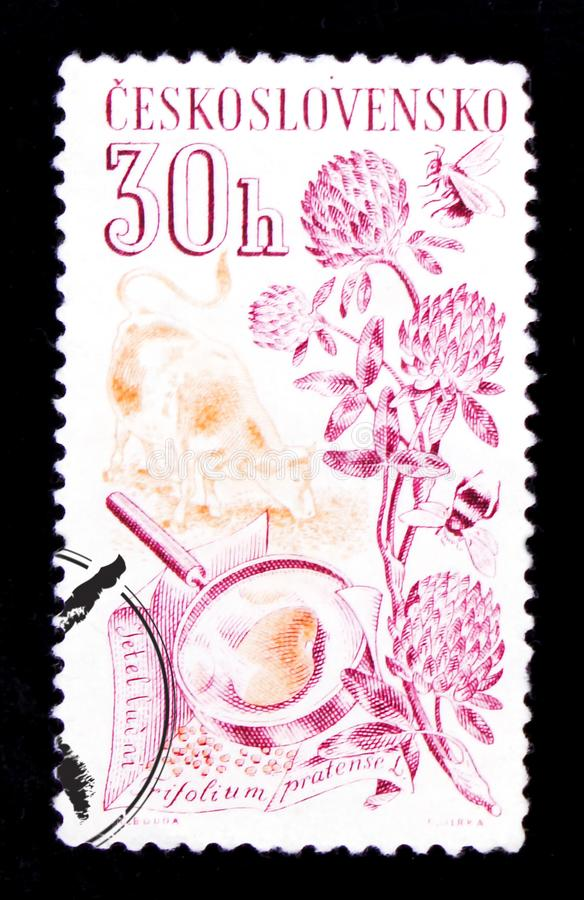 MOSCOW, RUSSIA - JUNE 20, 2017: A stamp printed in Czechoslovakia shows clover, bee and honey, circa 1961 royalty free stock images