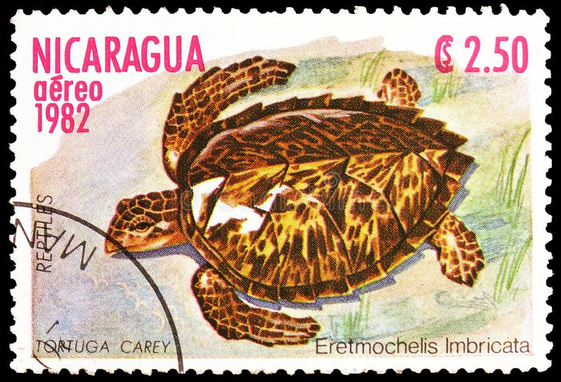 Hawksbill Turtle Eretmochelys imbricata, Reptiles serie, circa 1982. MOSCOW, RUSSIA - MARCH 23, 2019: Postage stamp printed in Nicaragua shows Hawksbill Turtle stock image