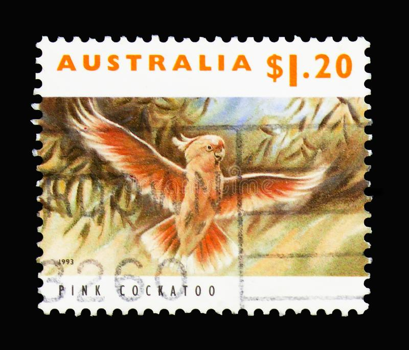 Pink Cockatoo (Kakatoe leadbeateri), Endangered Species serie, c. MOSCOW, RUSSIA - MARCH 18, 2018: A stamp printed in Australia shows Pink Cockatoo (Kakatoe royalty free stock photos