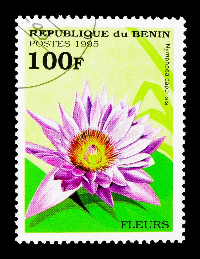 Nymphaca capusis, Flowers serie, circa 1995. MOSCOW, RUSSIA - MARCH 18, 2018: A stamp printed in Benin shows Nymphaca capusis, Flowers serie, circa 1995 stock images