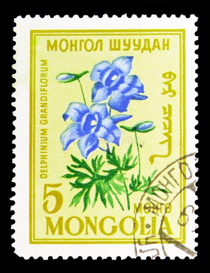 Delphinium grandiflorum, Flowers serie, circa 1960 royalty free stock image