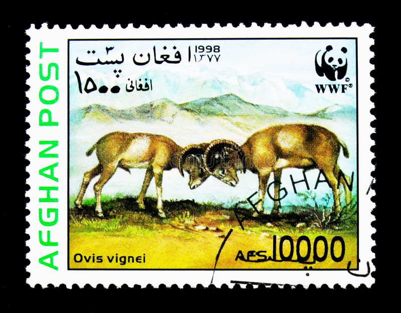 Urial (Ovis orientalis vignei), World Wildlife Fund (Wild sheep). MOSCOW, RUSSIA - NOVEMBER 25, 2017: A stamp printed in Afghanistan shows stock photo