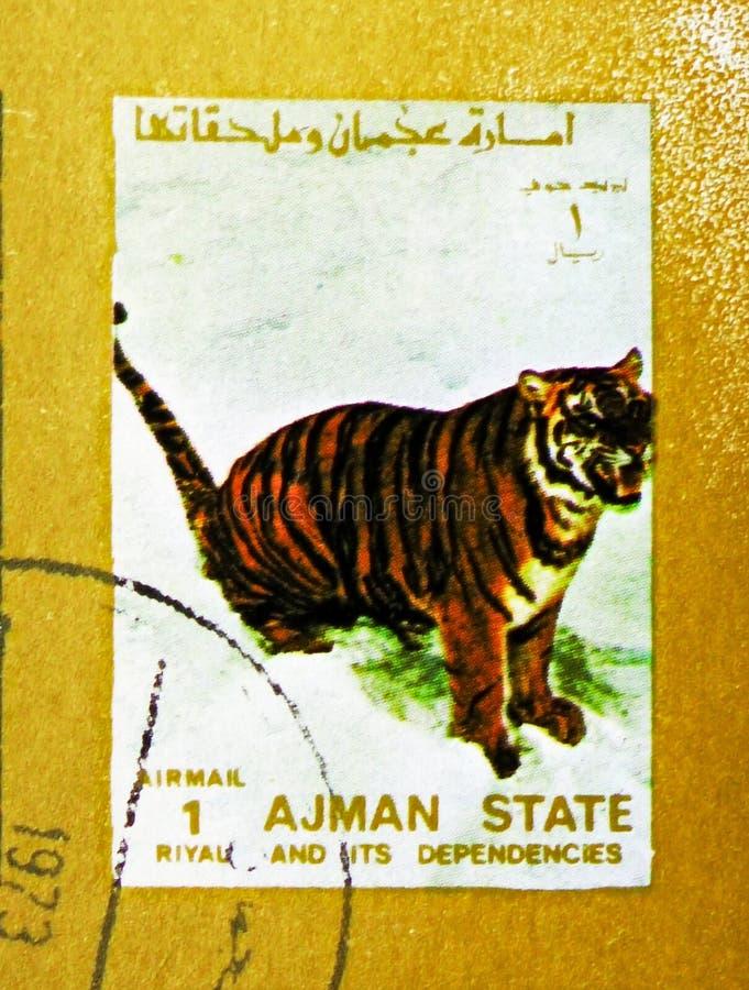 Tiger (Panthera tigris), Animals, big format serie, circa 1973. MOSCOW, RUSSIA - NOVEMBER 10, 2018: A stamp printed in Ajman shows Tiger (Panthera tigris) stock image