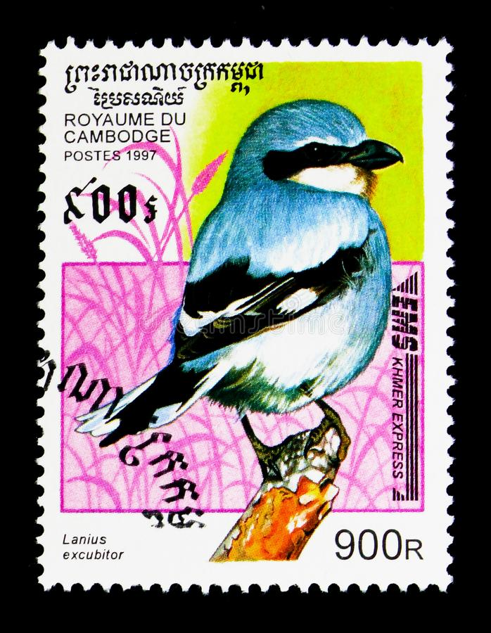 Northern Shrike Lanius excubitor, Birds serie, circa 1997. MOSCOW, RUSSIA - NOVEMBER 24, 2017: A stamp printed in Cambodia shows Northern Shrike Lanius excubitor royalty free stock photography