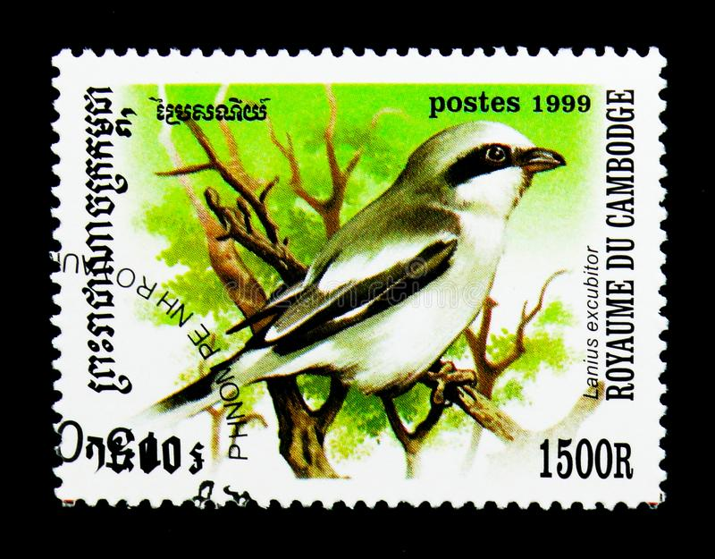 Northern Shrike Lanius excubitor, Birds serie, circa 1999. MOSCOW, RUSSIA - NOVEMBER 24, 2017: A stamp printed in Cambodia shows Northern Shrike Lanius excubitor stock photo