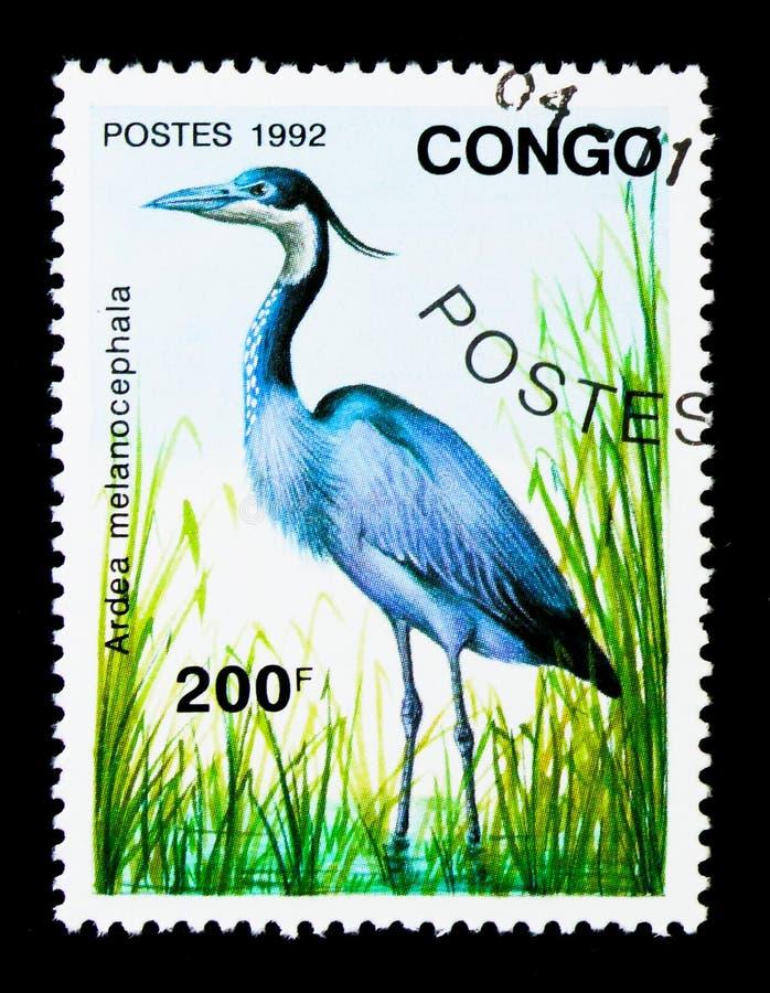 Black-headed Heron (Ardea melanocephala), Birds serie, circa 199. MOSCOW, RUSSIA - NOVEMBER 26, 2017: A stamp printed in Congo shows Black-headed Heron royalty free stock photo