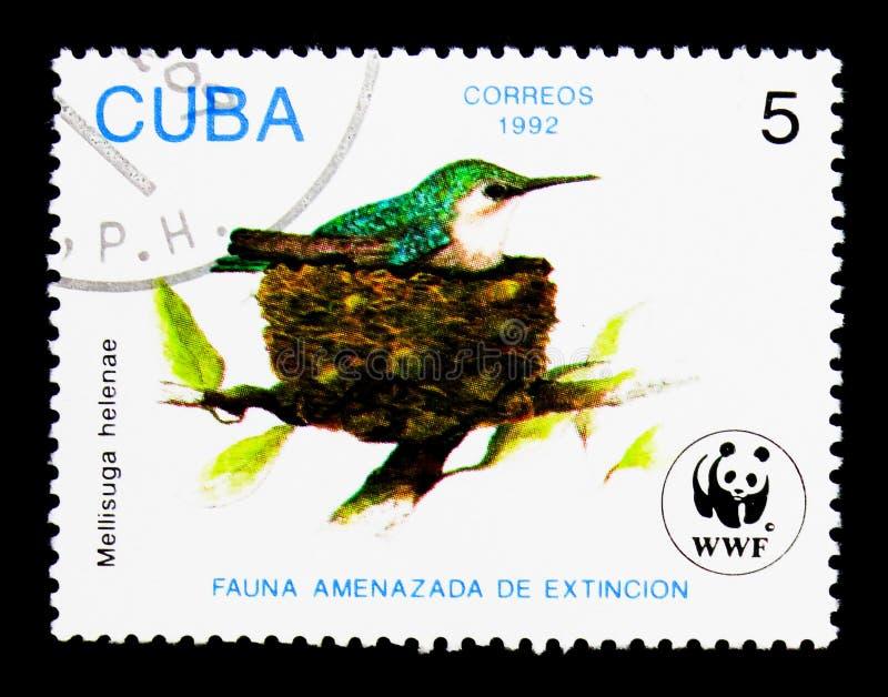 Bee Hummingbird Mellisuga helenae, serie, circa 1992. MOSCOW, RUSSIA - NOVEMBER 25, 2017: A stamp printed in Cuba shows Bee Hummingbird Mellisuga helenae, serie stock image