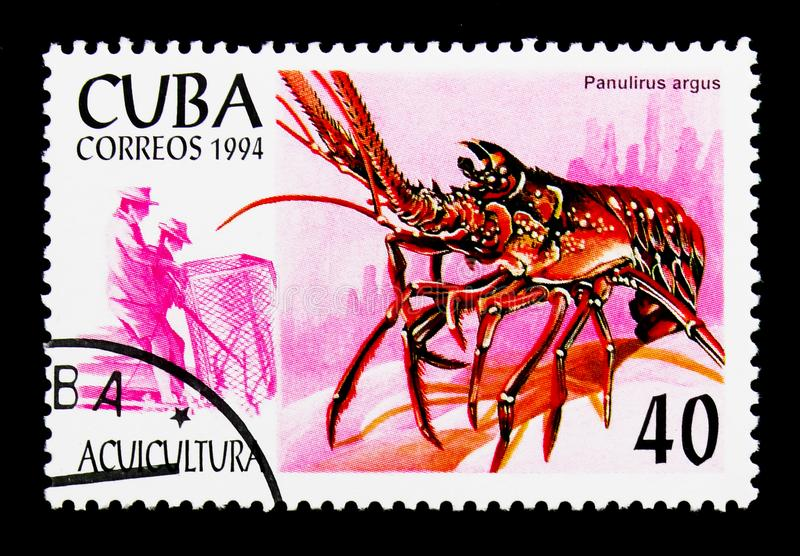Caribbean Spiny Lobster Panulirus argus, Aquaculture serie, circa 1994. MOSCOW, RUSSIA - NOVEMBER 25, 2017: A stamp printed in Cuba shows Caribbean Spiny Lobster stock images