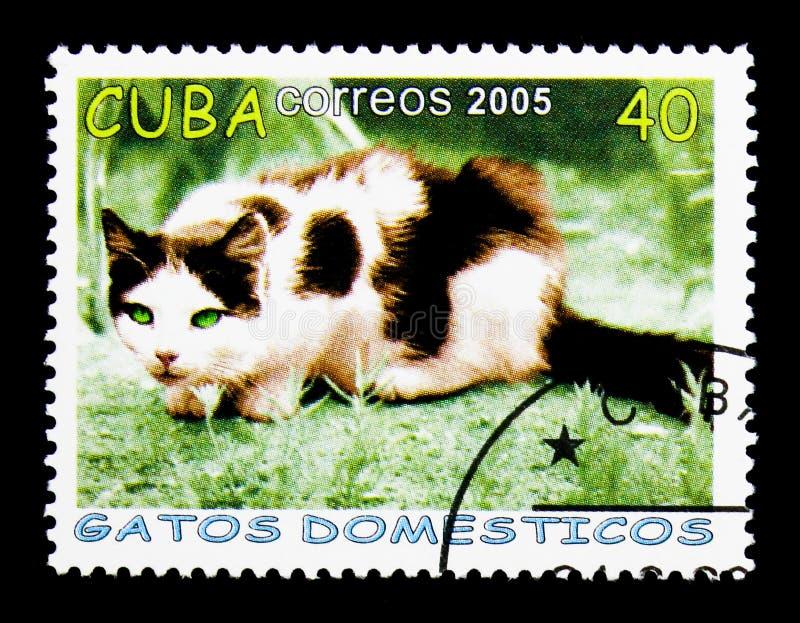 Domestic Cat Felis silvestris catus lurks, serie, circa 2005. MOSCOW, RUSSIA - NOVEMBER 25, 2017: A stamp printed in Cuba shows Domestic Cat Felis silvestris stock photography