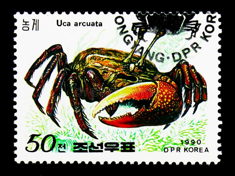 Bowed Fiddler Crab Uca arcuata, Crabs serie, circa 1990. MOSCOW, RUSSIA - NOVEMBER 24, 2017: A stamp printed in Democratic People`s republic of Korea shows Bowed stock image