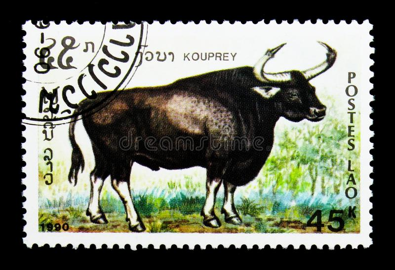 Kouprey (Bos sauveli), Endangered animals serie, circa 1990. MOSCOW, RUSSIA - NOVEMBER 26, 2017: A stamp printed in Lao People's Democratic royalty free stock photography