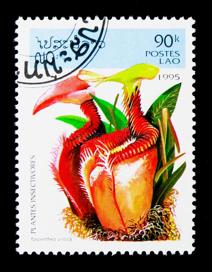 Nepenthes villosa, Insect-eating plants serie, circa 1995. MOSCOW, RUSSIA - NOVEMBER 26, 2017: A stamp printed in Lao People's Democratic Republic shows royalty free stock images