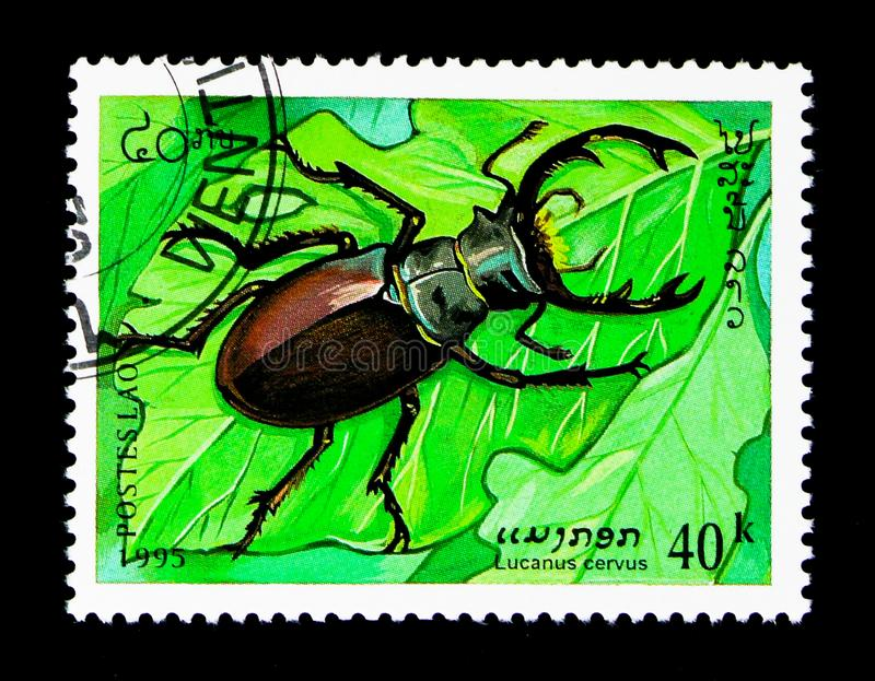 Stag Beetle (Lucanus cervus), Insects serie, circa 1995. MOSCOW, RUSSIA - NOVEMBER 25, 2017: A stamp printed in Lao People's Democratic Republic royalty free stock photography